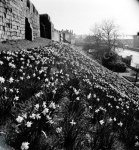 York, City Walls